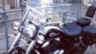 Honda VT750C Shadow 2000 - озз