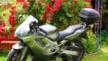 Honda CBR600F4i 2001 - СиБиР