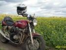 Yamaha XJR400 1993 - изольда