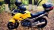 Yamaha TDM900 2003 - Мот.