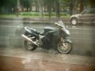 Honda CBR1100XX Super Blackbird 2000 - catbird