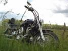 Yamaha Drag Star XVS1100 2000 - Дружище