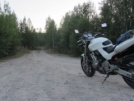 Honda CB600F Hornet 1999 - Ласточка