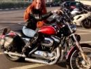 Harley-Davidson 1200 Sportster Custom 2008 - шпрот