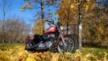 Harley-Davidson XL 1200 R Sportster Roadster 2004 - Морковка