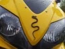 Honda CBR600F4i 2006 - Пчелка
