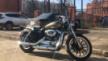 Harley-Davidson Sportster 1200 2006 - Креветка