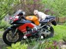 Honda CBR929RR FireBlade 2001 - Файер