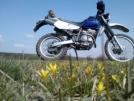 Suzuki Djebel 250XC 2003 - Джебелёк