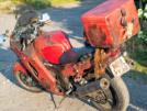 Honda CBR1100XX Super Blackbird 1998 - Крыса