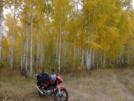 Yamaha YBR125 2014 - Яков