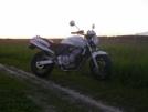 Honda CB600F Hornet 2002 - хоря