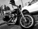 Harley-Davidson XL1200L Sportster Low 2006 - Спорти