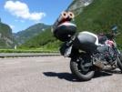 Honda CB600F Hornet 2009 - Шмель