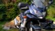 Suzuki GSF1250 Bandit 2007 - Злой