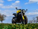 Honda CBR1100XX Super Blackbird 2002 - cafefighter