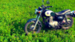 Kawasaki Estrella BJ250 1999 - Estrella