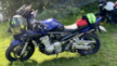 Suzuki GSF1250 Bandit 2008 - Бульдожик