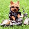 Blues_Rider