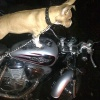 motodog
