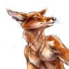 anTOXA_Foxes