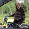 Circus_Bear